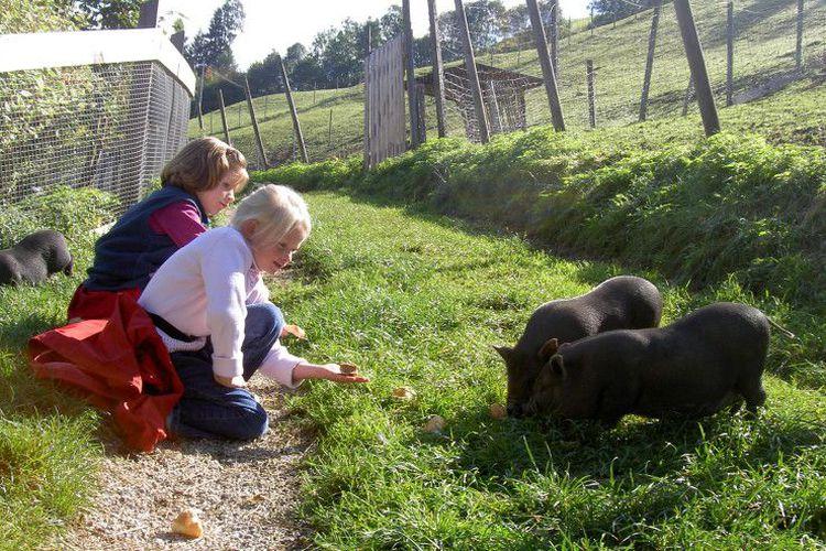 Bauernhof mit Streichelzoo im Zillertal